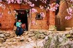 Chùm ảnh: Đẹp ngỡ ngàng mùa xuân ở biên cương (P2)