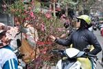 Chùm ảnh: Sắc Xuân len vào từng ngõ ngách phố cổ Hà Nội