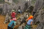 Mùa xuân trải nghiệm khám phá Cao nguyên đá Đồng Văn