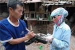 Virus cúm H7N9 gây tử vong cho người ở TQ nguy hiểm thế nào?