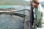 TGĐ Công ty cá tầm VN gây sốc vì phát ngôn tục tĩu