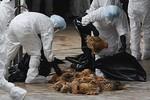 Khả năng bùng phát cúm A H5N1 dịp tết Giáp Ngọ
