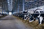 Vinamilk Nghệ An, trang trại bò sữa đầu tiên ĐNA đạt chuẩn quốc tế