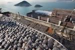 Phơi vây cá mập như cá khô trên mái nhà tại Hồng Kông