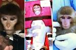 Iran bịa chuyện đưa khỉ vào vũ trụ?
