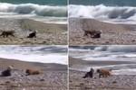 Video: Chú chó thông minh, dũng cảm bảo vệ em bé không lao xuống biển
