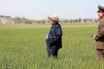 Kim Jong-un đội mũ thời trang thăm ruộng lúa