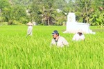 Người Trung Quốc thuê đất trồng lúa: Còn nhiều tình tiết bất thường
