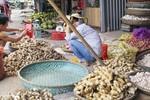 Nhà hàng, khách sạn Việt chuộng dùng gừng Trung Quốc