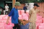 Qua khỏi cửa khẩu, vải thiều Việt Nam bị gắn mác Trung Quốc