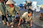 Chuyện lạ: Thương lái tranh giành mua ốc bươu vàng ở Hà Nội