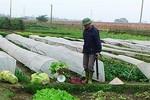 Phun thuốc cực độc sản xuất... rau an toàn bán cho Hà Nội