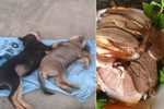Ăn thịt chó bắt trộm, hiểm họa thuốc cực độc Trung Quốc