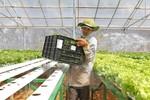 Vingroup sẽ xây Trung tâm nông nghiệp ứng dụng cao tại Quảng Ninh