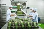 Vingroup ra mắt sản phẩm rau nhà kính đầu tiên