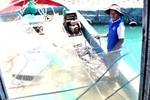 Ngư dân trên 2 tàu bị TQ tấn công vẫn quyết tâm bám biển Hoàng Sa