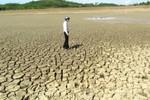 Hạn hán khiến hàng nghìn hecta lúa có nguy cơ mất trắng