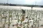 """Thủy điện """"nuốt"""" hàng ngàn hecta rừng, gây ngập lụt vùng hạ du"""