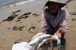Bộ Y tế sẽ kết luận hải sản các tỉnh miền Trung ăn được hay chưa
