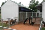 """Người Trung Quốc lập trang trại chó """"không biết để làm gì"""" ở Long An?"""