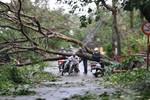 Hình ảnh của làng quê lúa Thái Bình bị tàn phá sau bão Sơn Tinh