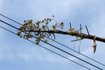 Công an đang xem xét khởi tố vụ làm mất điện hơn 20 tỉnh miền Nam