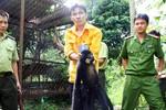 Giải cứu động vật quý hiếm trong trang trại của quan chức tỉnh