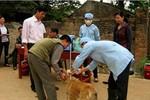 Hà Nội: Lập tổ công tác diệt chó lạ cắn 52 người