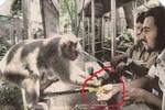 Chuyện khỉ giúp người gợi nhớ nỗi đau vụ giết voọc