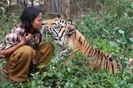 Vuốt râu hùm, trở thành bạn thân của hổ