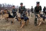 Triều Tiên lấy ảnh Bộ trưởng QP Hàn làm bia tập bắn, huấn luyện chó