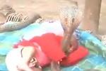 Video: 4 chú rắn hổ mang canh chừng giấc ngủ cho 1 em bé
