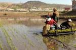 Đại sứ xuống đồng cấy lúa, Trung Quốc muốn giúp Triều Tiên chống hạn