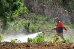 Hóa chất Trung Quốc đang tàn phá đất nông nghiệp của Lào
