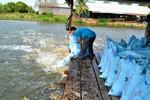 Trung Quốc với chiến lược thống trị thị trường thức ăn chăn nuôi Việt Nam