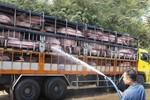 Nhận diện nguy cơ Trung Quốc khống chế ngành chăn nuôi heo của Việt Nam
