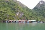 Gần 1700 tỷ đồng phục dựng, bảo tồn văn hoá làng chài trên vịnh Hạ Long