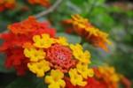 Hương sắc hoa tháng 3