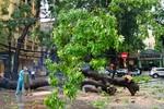 Nguy cơ bão số 14 đổ bộ và gây thiệt hại lớn tại các tỉnh miền Bắc