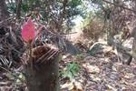 Hai sếp kiểm lâm mất chức vì để xảy ra phá rừng