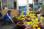 TP.HCM: Chiều 29 tết, bán tháo, bán đổ hoa  kiểng để về quê