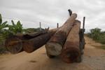 """Ai để """"lọt lưới"""" đường dây vận chuyển gỗ sưa tiền tỷ sang Trung Quốc?"""