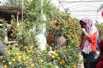 Đi xem vườn quất Bonsai những ngày chờ tết
