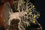 Cận cảnh cây mai cổ thụ 300 năm tại Hội hoa xuân