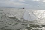 Bộ GTVT, Cục Hàng hải thông tin chi tiết về vụ chìm tàu ở Cần Giờ
