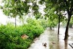 Hà Nội: Vợ Trưởng công an phường bị đâm chết trên phố