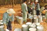 Sai phạm tại Tập đoàn Công nghiệp cao su Việt Nam được xử lý thế nào?