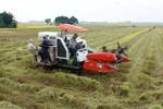 Hỗ trợ hơn 470 tỷ cho 9 địa phương bảo vệ và phát triển đất trồng lúa