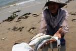 Có khởi tố hình sự vụ Formosa xả thải ra biển miền Trung?