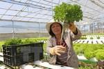 Dành khoảng 60 nghìn tỷ đồng đầu tư các khu nông nghiệp công nghệ cao